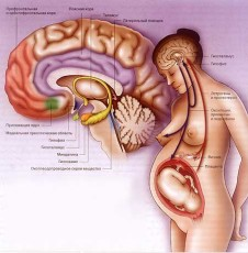 Беременность и гормоны - MY-DOKTOR.RU