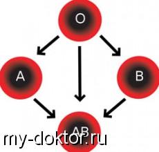 Наш облик и характер зависит от группы крови! Почему? - MY-DOKTOR.RU