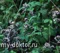 Антибиотикам найдена высокоэффективная замена - MY-DOKTOR.RU