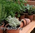 Аптека на подоконнике - MY-DOKTOR.RU