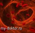 Несколько способов восстановления процессов кроветворения - MY-DOKTOR.RU