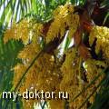 Пальмовая пыльца при лечении бесплодия - MY-DOKTOR.RU