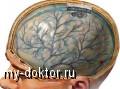 Полезные витамины для мозговой активности - MY-DOKTOR.RU