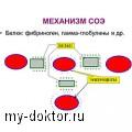 Скорость оседания эритроцитов: норма, методы Панченкова и Вестергрена - MY-DOKTOR.RU