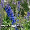 Живокость - MY-DOKTOR.RU